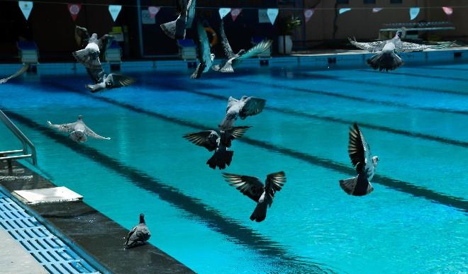 दक्षिण अफ्रीका में शिविर लगाने की योजना बना रहा है भारतीय तैराकी महासंघ