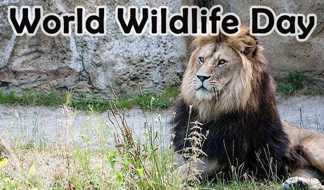 विश्व वन्यजीव दिवस: खतरे में है सैंकड़ों जीव प्रजातियों का अस्तित्व