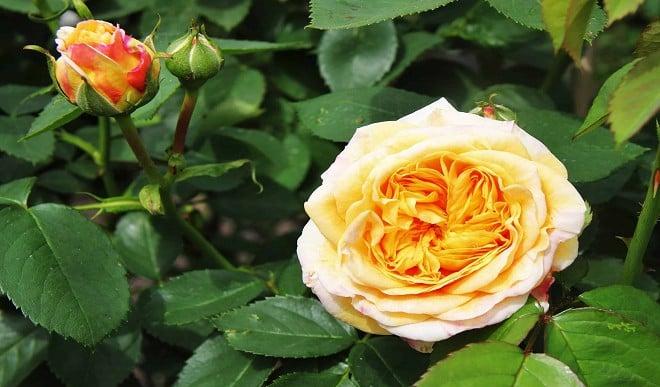 प्रकृति से है प्यार तो बागवानी में बनाएं अपना कॅरियर, होगी अच्छी आमदनी